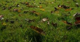 Wann Rasen letztes Mal mähen