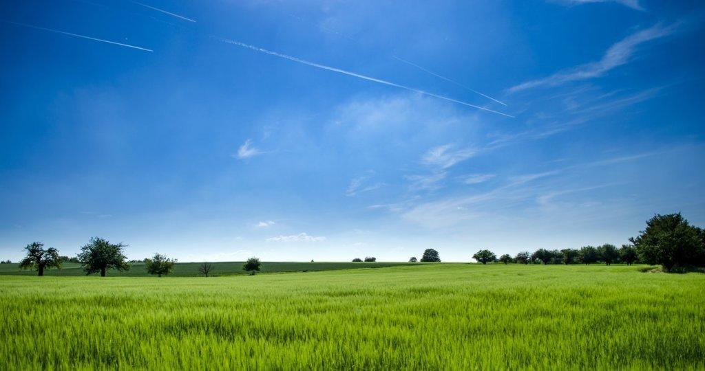 Welcher Rasenmäher für hohes Gras