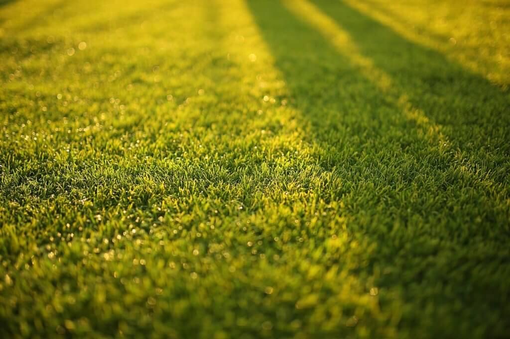 Warum Rasenmäher mit Mulchfunktion