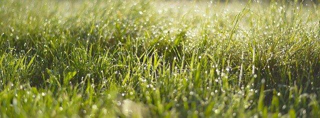 Elektro Rasenmäher für hohes Gras